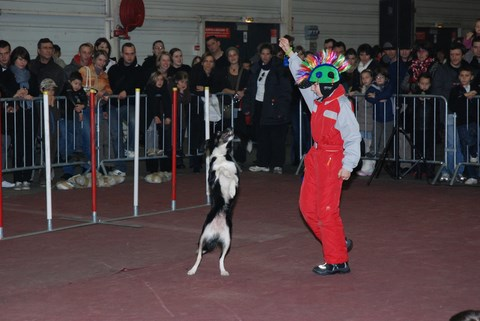 SALON ANIMALO DE BELFORT